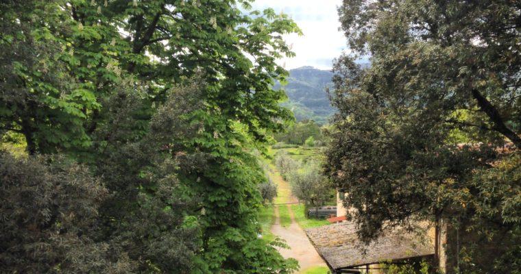 Alessandra's Reflections: Panzanella, the true Tuscan style